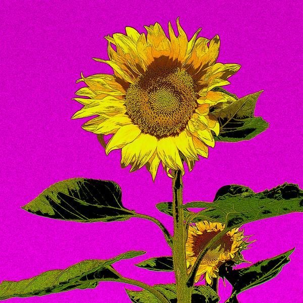 Lauree Feldman Sunflower