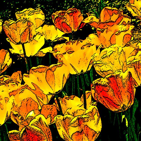 Lauree Feldman Yellow Tulips