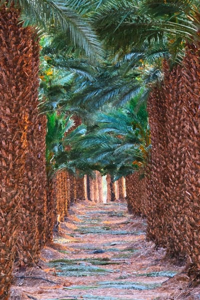 Lauree Feldman Date Palms
