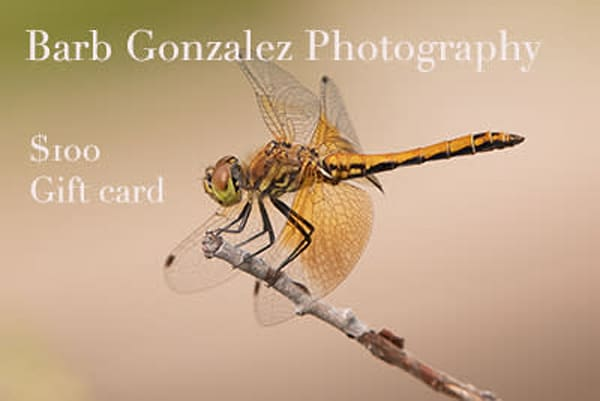 $100 Gift Card | Barb Gonzalez Photography