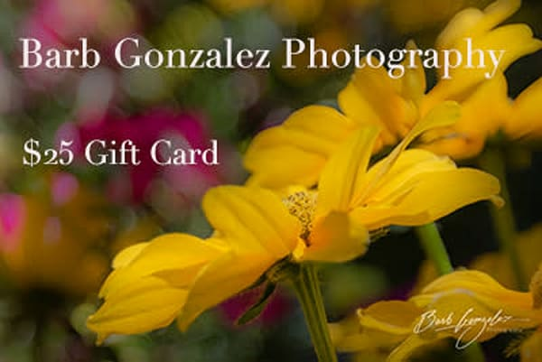 $25 Gift Card | Barb Gonzalez Photography
