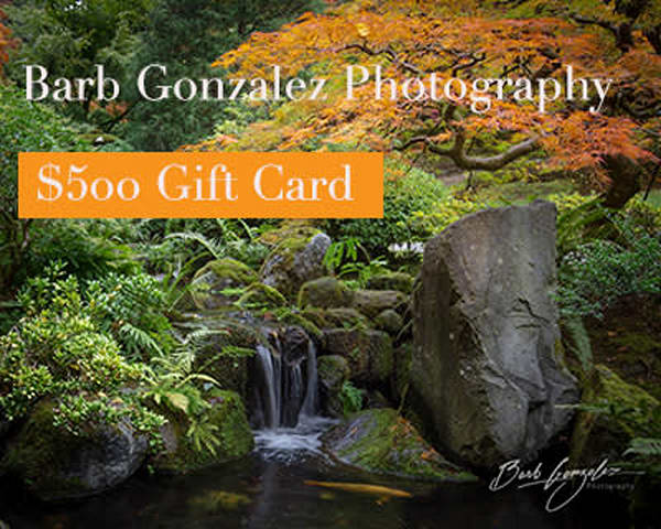$500 Gift Card | Barb Gonzalez Photography