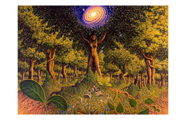 Tree Incarnation 5x7 inch notecard