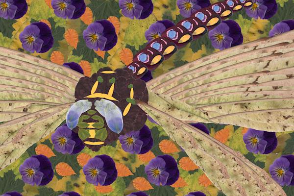 Dragonfly Art | smacartist