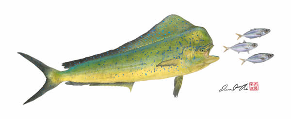 Traditional Gyotaku Paintings | Bullhead Mahimahi by Desmond Thain