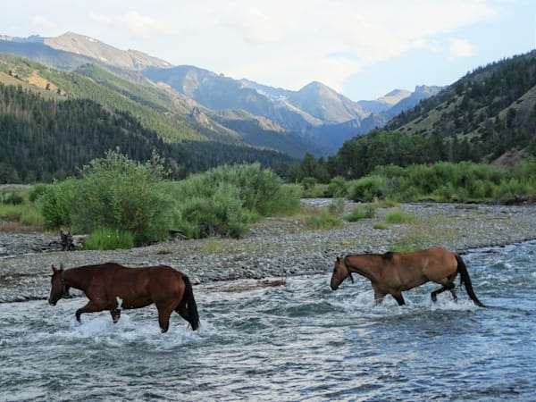 Photograph of horses crossing the Elk Fork river for sale as Fine Art