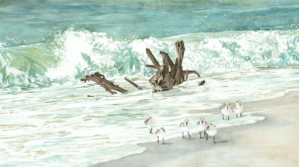 Print from a watercolor painting by Sandra Galloway of sandpipers walking along a beach with driftwood in the surf. Printed on  fine-art paper.