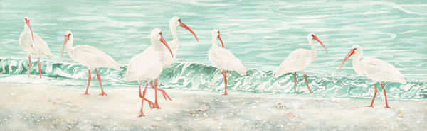 A Watercolor of a flock of seven Ibis walking along the beach,  by artist Sandra Galloway. Printed on fine art paper.