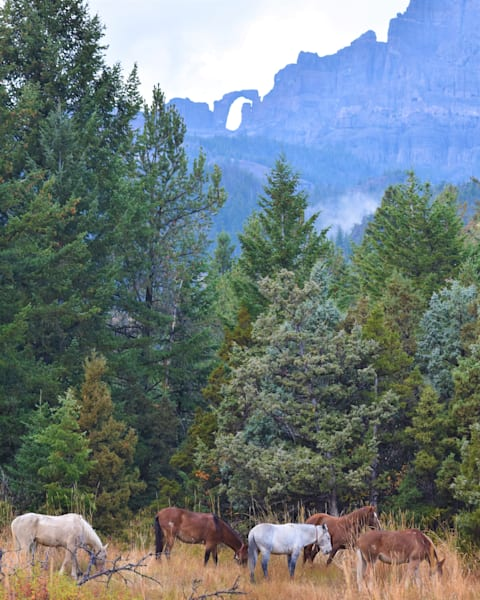 Photograph of horses and mules grazing with Blackwater Natural Bridge for sale as Fine Art