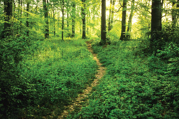 Woodland Pathway, Mariemont, OH