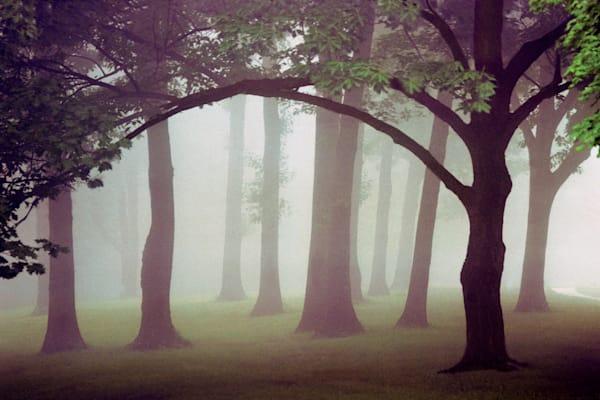 Presidents Grove, Eden Park