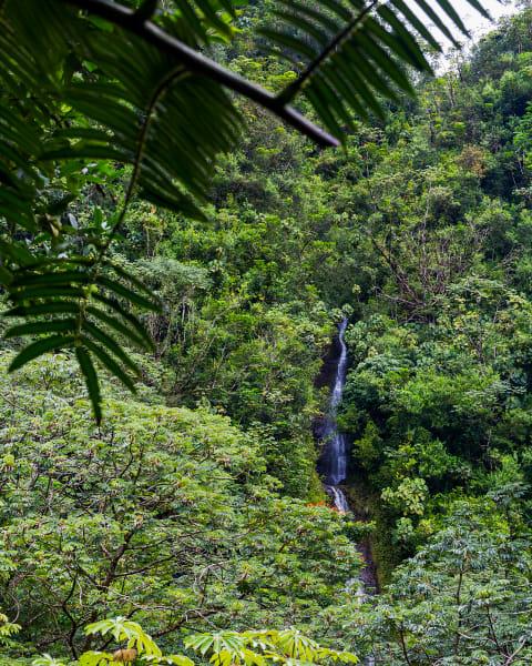 Manoa Falls In A Hawaiian Tropical Rainforest Photograph For Sale As Fine Art