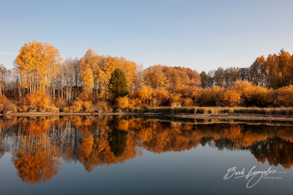 Autumn Trees Golden Hour Deschutes River photo for sale by Barb Gonzalez Photography