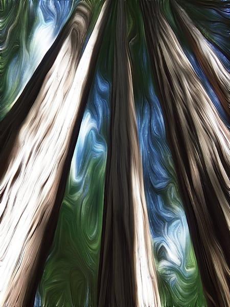 Muir Woods Tall Art   BBrom ART