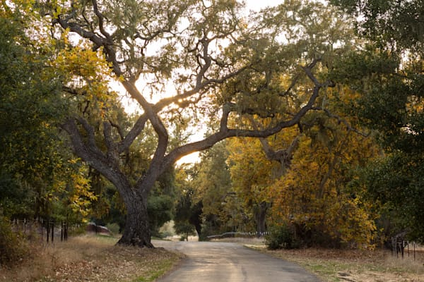 Fall color with oak