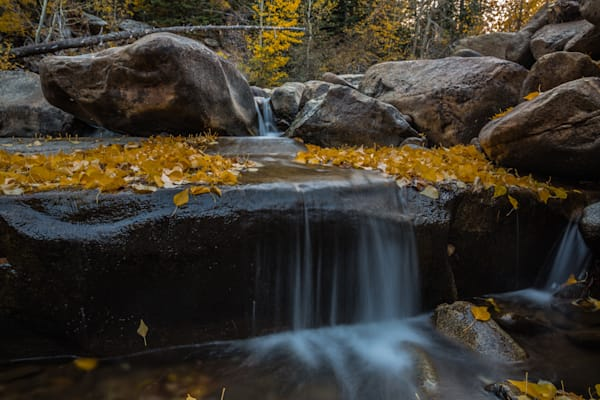 Through The Golden Leaves Photography Art | David N . Braun Photography