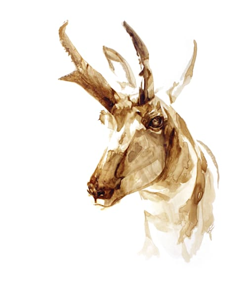 SK Antelope - Original Coffee Painting