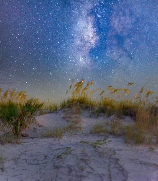 Sea Oats, Sand, and Stars