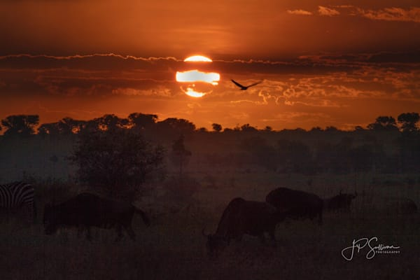 An African sunrise filled with fog, wildlife and beautiful possibilities - fine art photography prints - JP Sullivan Photography