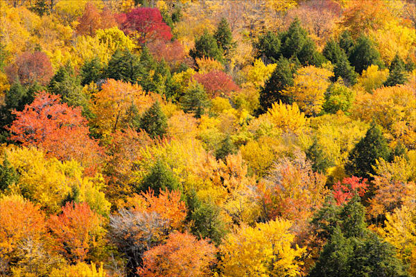 Porucupine Mountains in Autumn