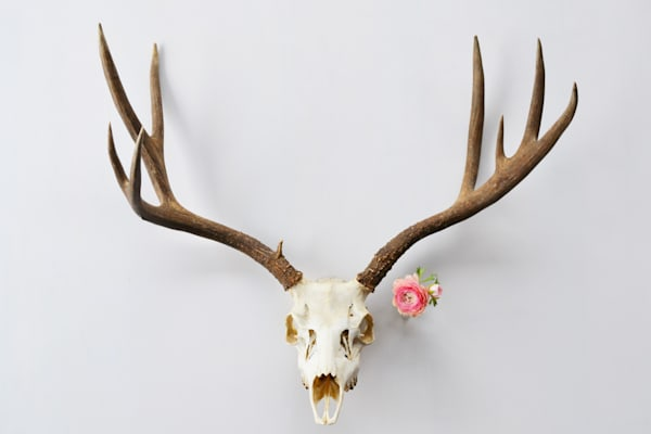 Photograph of Mule Deer and Ranunculus for sale as Fine Art | Wapiti Wildscapes