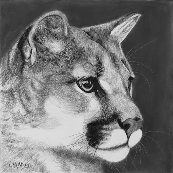 Mountain Lion Musings