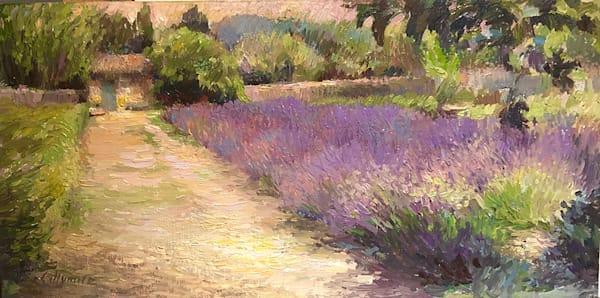 Lavender in Van Gogh's Hospital Garden, St Rémy de Provence