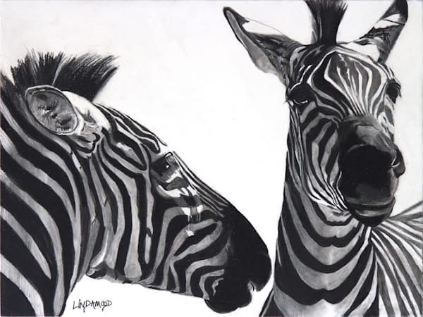 Zebra Confidences