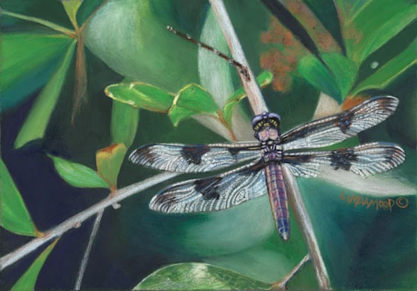 Dragonfly I  Art | Lindamood Art