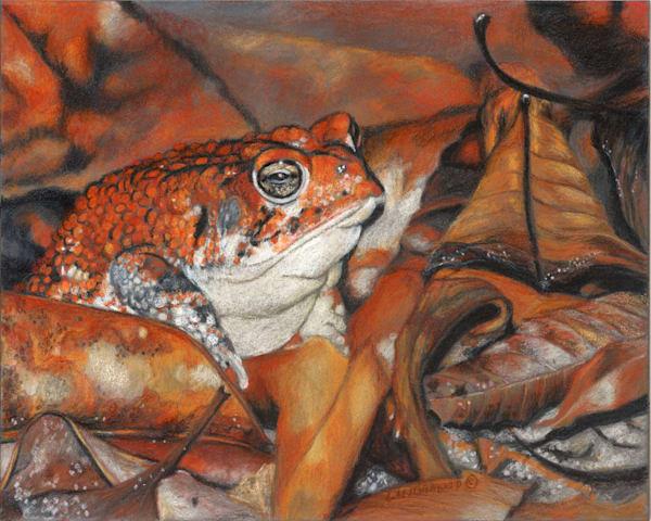 Camouflage Amphibian-Style