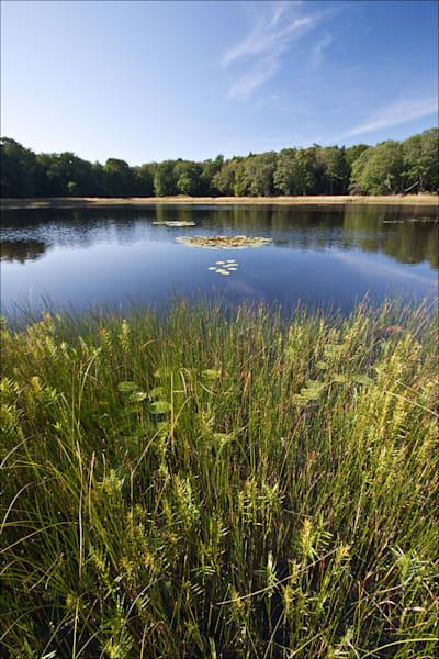 Miller's Marsh