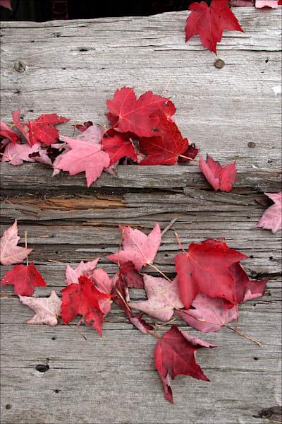 Maple leaves on Barn Wood