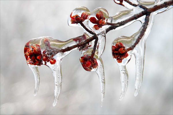 Exquisite fine art photos of natural details in Michigan