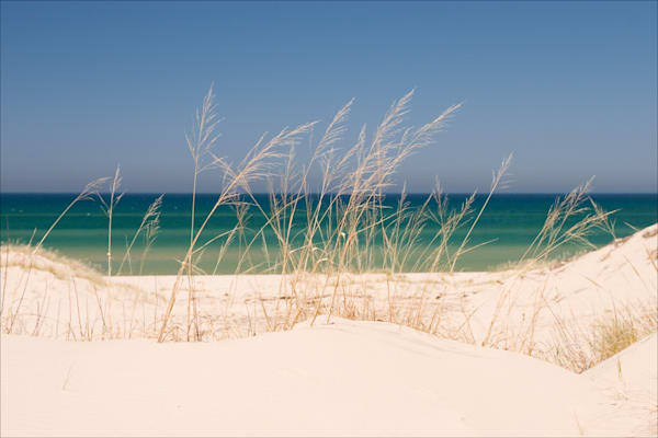 Dune Grass and Lake Michigan