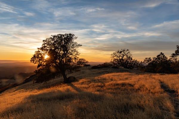 Oak with sunrays on Figueroa