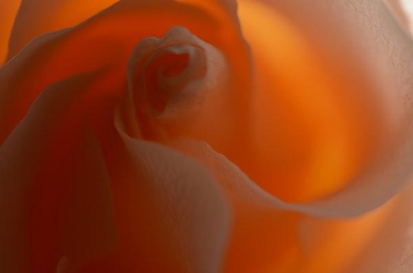 Peachrose4 Photography Art   LIGHT POETRY PHOTOS