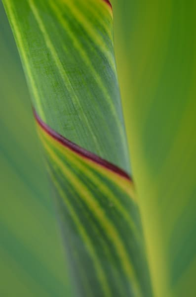 Greenspiral1 Photography Art | LIGHT POETRY PHOTOS