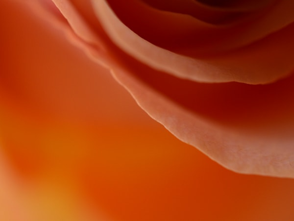 Melonrose1 Photography Art   LIGHT POETRY PHOTOS