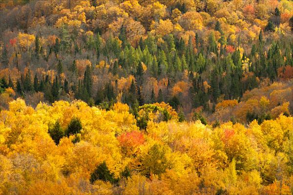 Copper Peak Vista