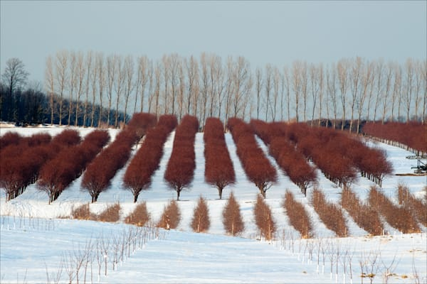 Fine art photos of Michigan's beautiful farms and orchards