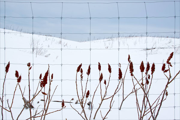Fence Row in Winter