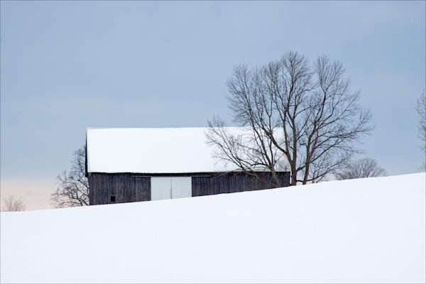 Barn and tree