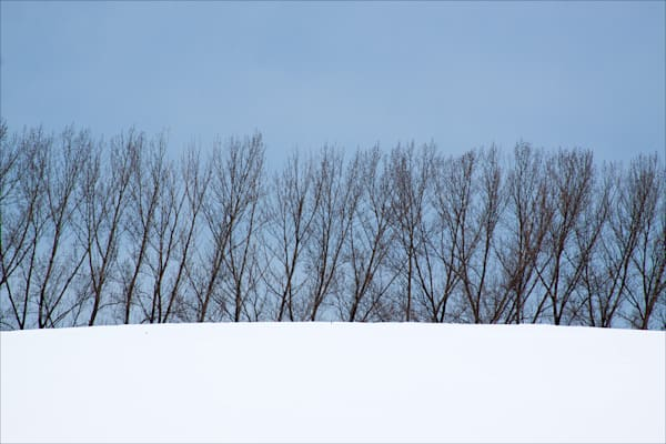 Windbreak in Winter