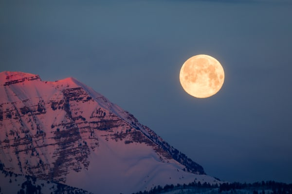 Timp with the pink moon.