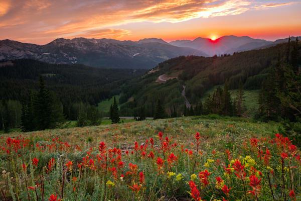 Wildflowers at Gaurdsmans Pass Utah