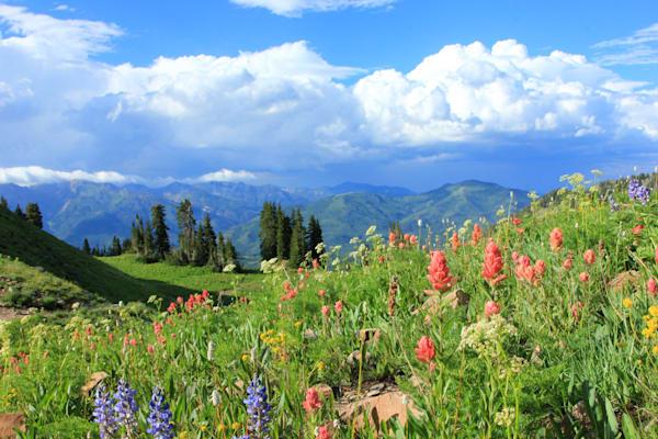 Timpanookie Wildflowers