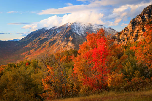 red maple with timp