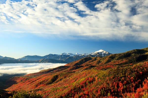 red maples with snow capped cascade mountain