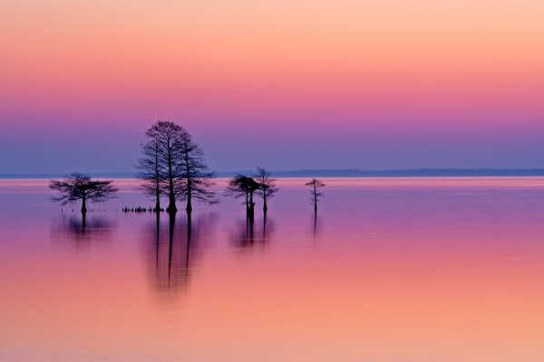 Lake Mattamuskeet NC | Robbie George Photography