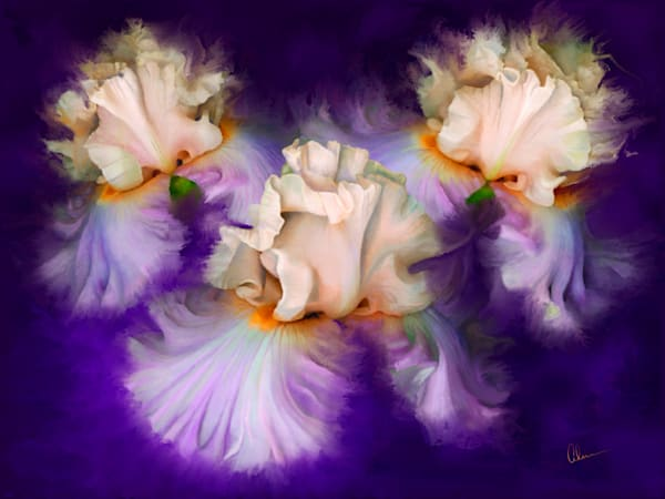 Dancing Iris Trio metal wall art. Aluminum prints of original paintings by the artist, Mary Ahern.
